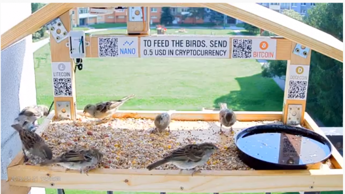 Crypto Bird Feeder – YouTuber Sets Up Live Cam To Feed Birds Via Crypto Donations