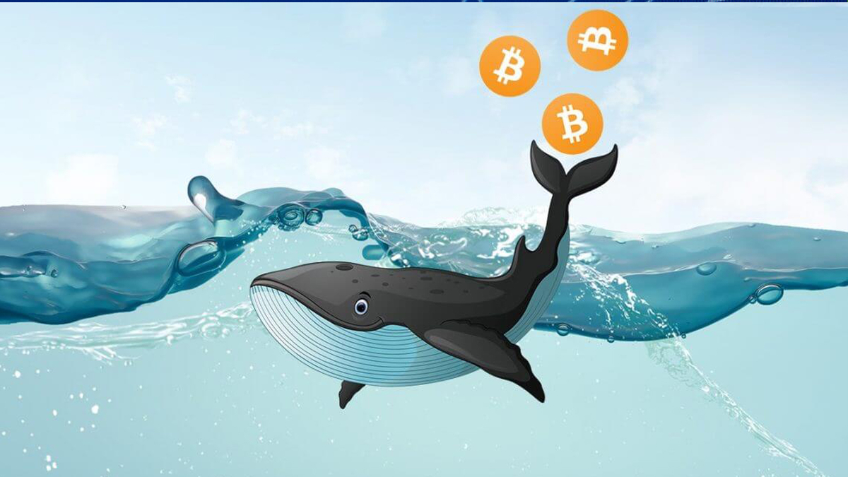 Whale Moves $43 Million USD Worth Of Bitcoin (BTC) From Xapo As Accumulation Period Sets In