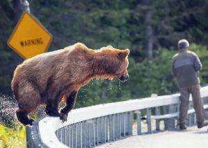 xrp bitcoin bear trap