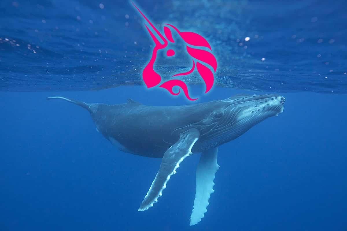 uniswap whales
