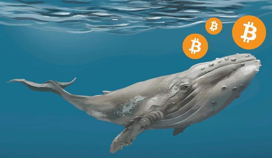 Grandes Depósitos de Bitcoin em Exchanges Por Baleias Dão Dicas sobre Mais Correções no Preço do BTC
